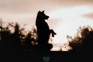fotografía contraluz perro