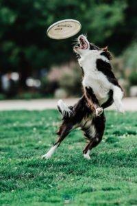 fotografia mascotas