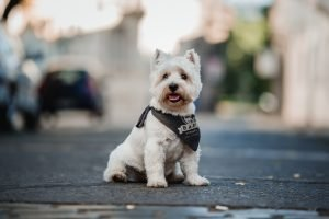 perro de tela