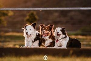 Fotógrafía de mascotas